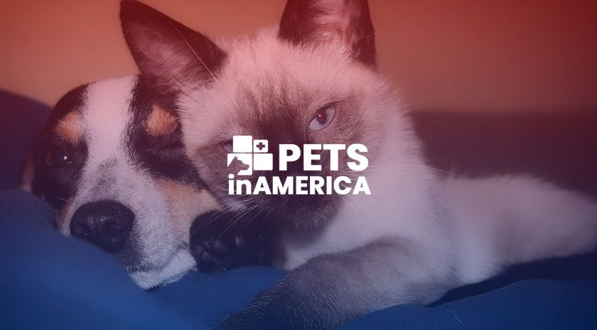 Blog8 840x465 - 4 interesting psychological differences between dog and cat people