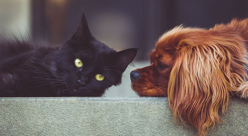 cats and ddogs - Understanding properly the dietary requirements of your cat and dog