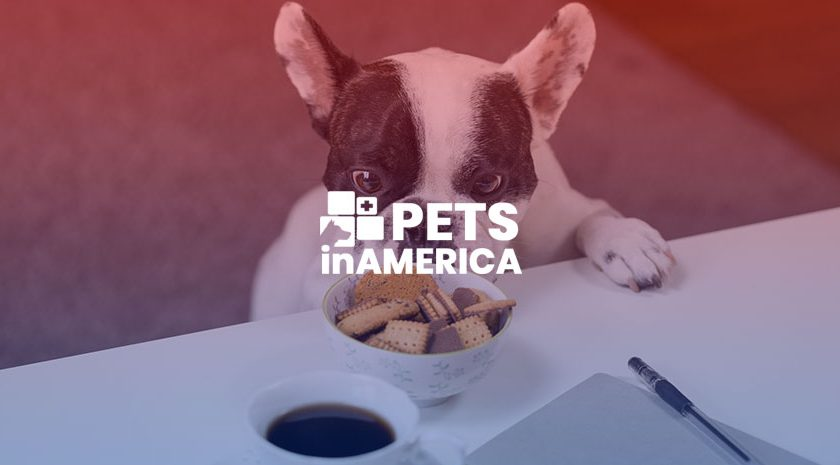 3 Affordable Pet Food & Bully Stick Brands