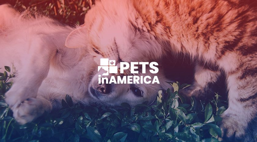 Understanding properly the dietary requirements of your cat and dog