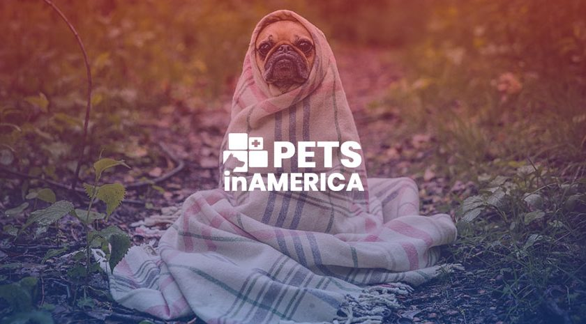 3 of the leading animal adoption centers in Washington State