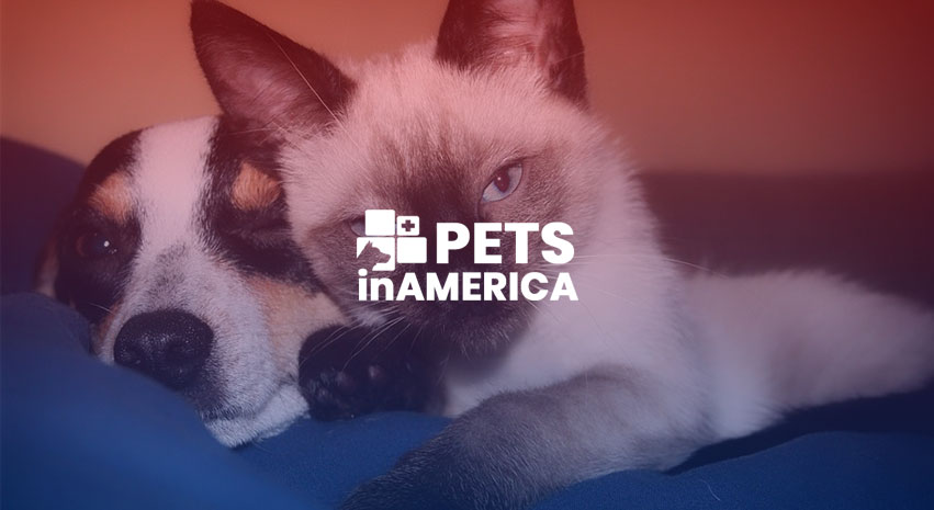 Blog8 - 4 interesting psychological differences between dog and cat people